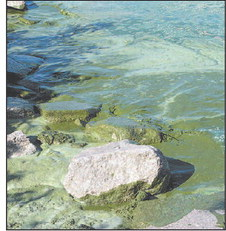 Blue-Green Algae Bloom Season Is Approaching
