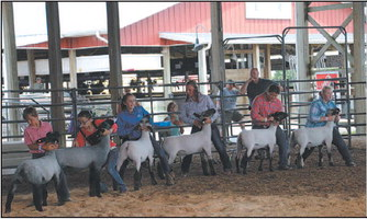 Washington County Fair Junior Livestock  Auction Celebrates 50 Years