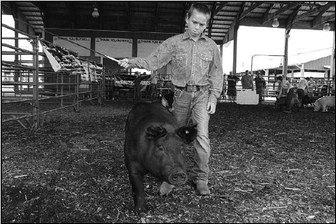 Fair Or Not, Area Youth Show Animals