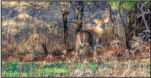 Statewide Deer Hunter Diary Study  To Be Conducted This Fall