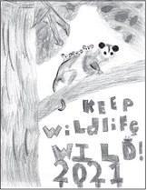 DNR Announces 2021 Keep Wildlife  Wild Poster Contest Winners