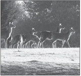 Help Shape Deer Hunting  In Wisconsin