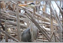 Horicon Marsh Bird Fest  Part of 'Migration Miracle'